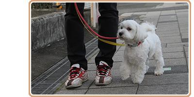 散歩トレーニング