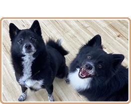 他犬とのふれあいトレーニング